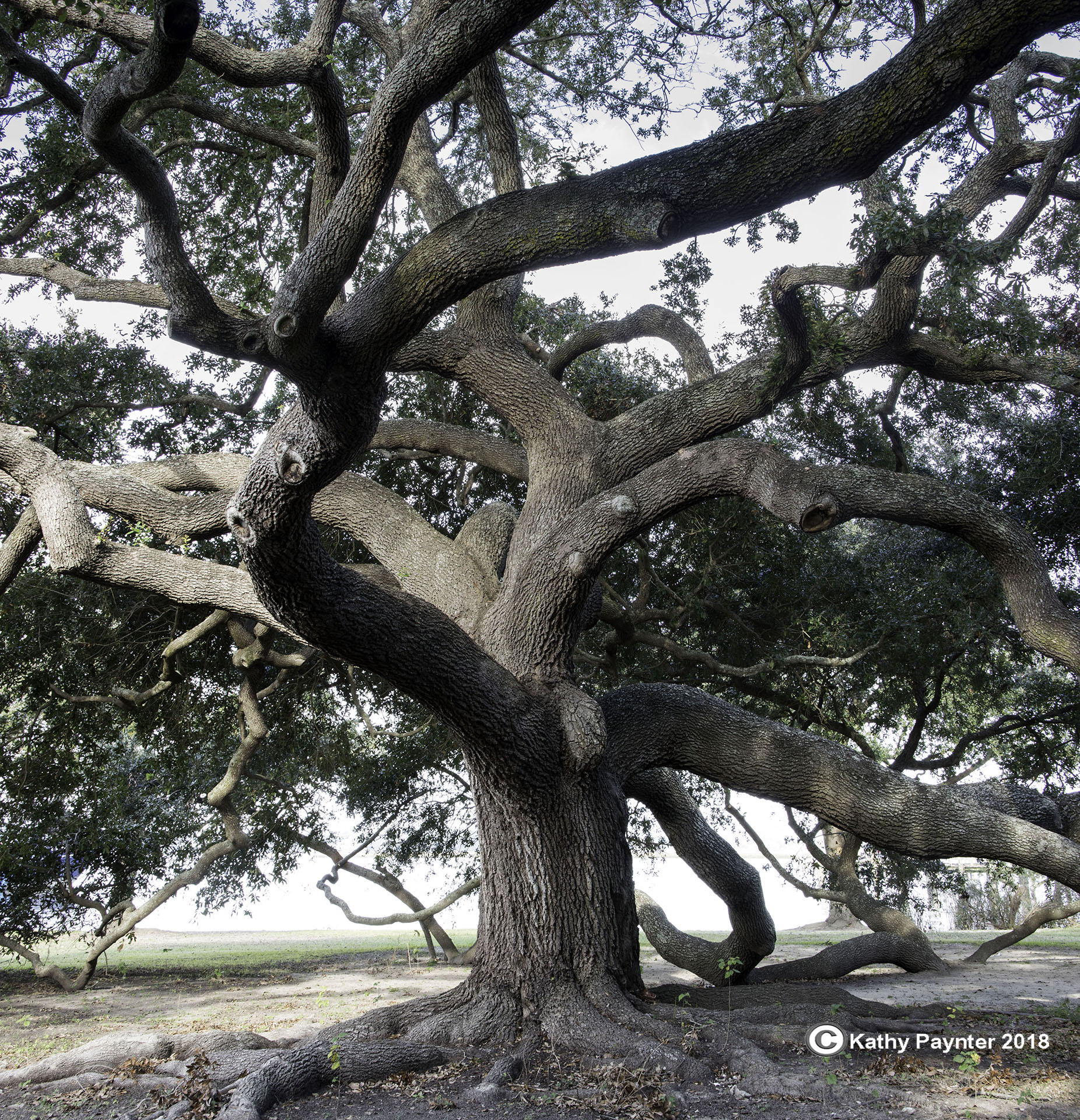 Bilxo adj pan tree 4434-36IN