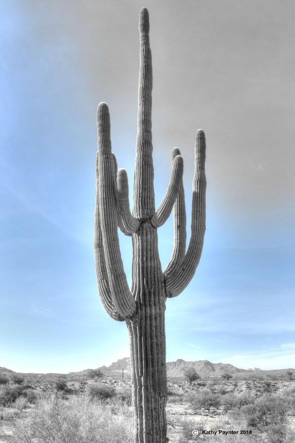 Desert Drive K75_4988-90IN