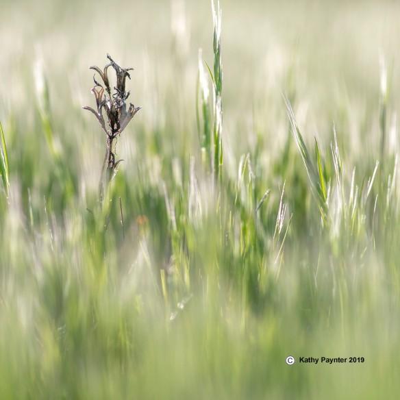 Grass K75_8533IN