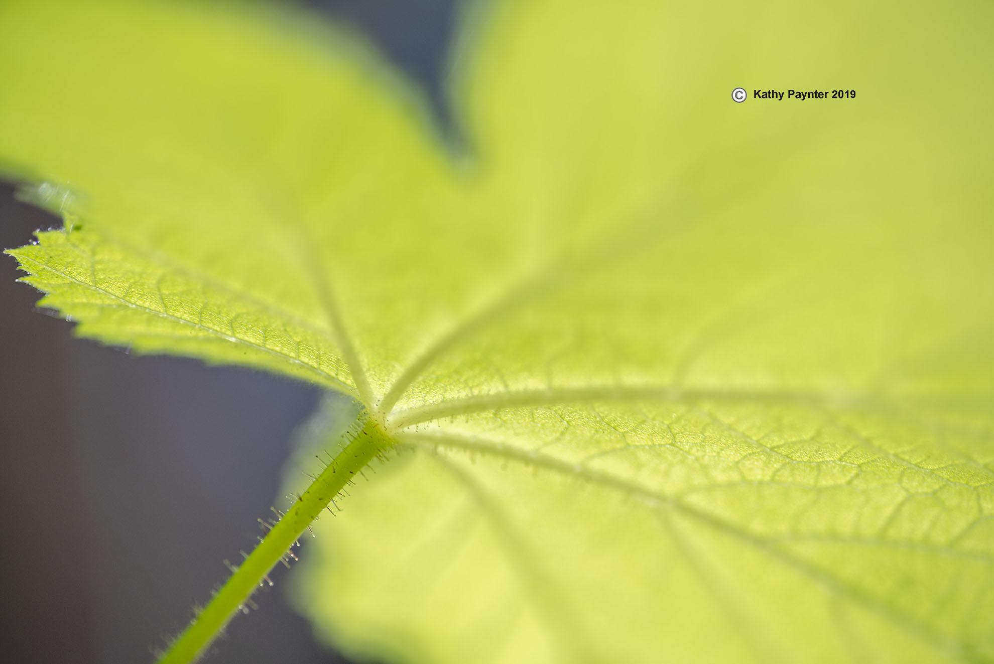 Leaf K75_9694IN