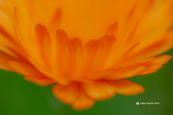 8-16-2019 Flower 0098