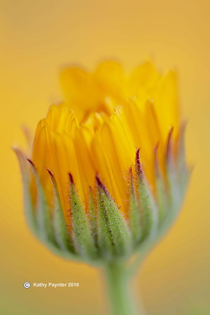 8-16-2019 Flower 0102