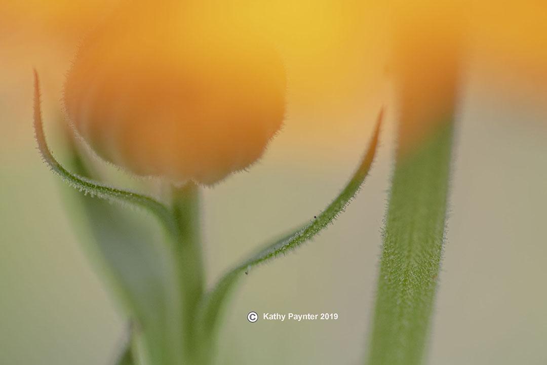 8-16-2019 Flower 0119