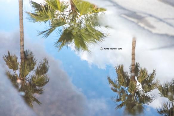 Reflection K75_0451IN
