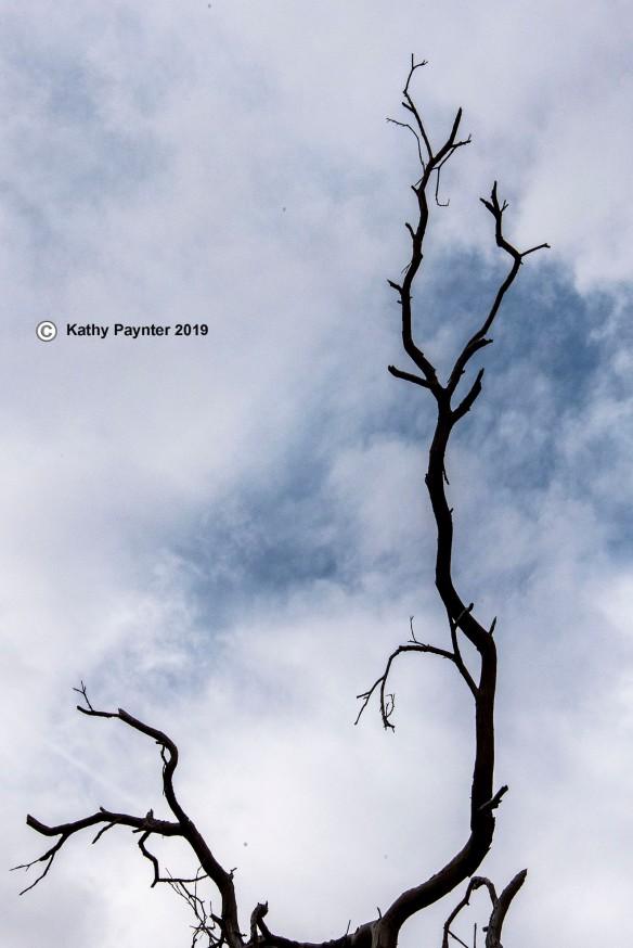 Tree K75_0407IN